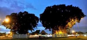 Beringin kembar ALKID Yogyakarta